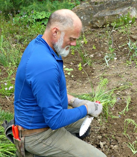 A gardener at Chanticleer is using a soil knife like a pick ax to make divots
