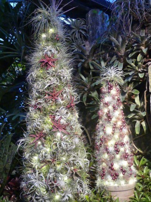 Air Plant trees