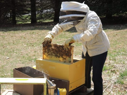 Setting up hives in the spring