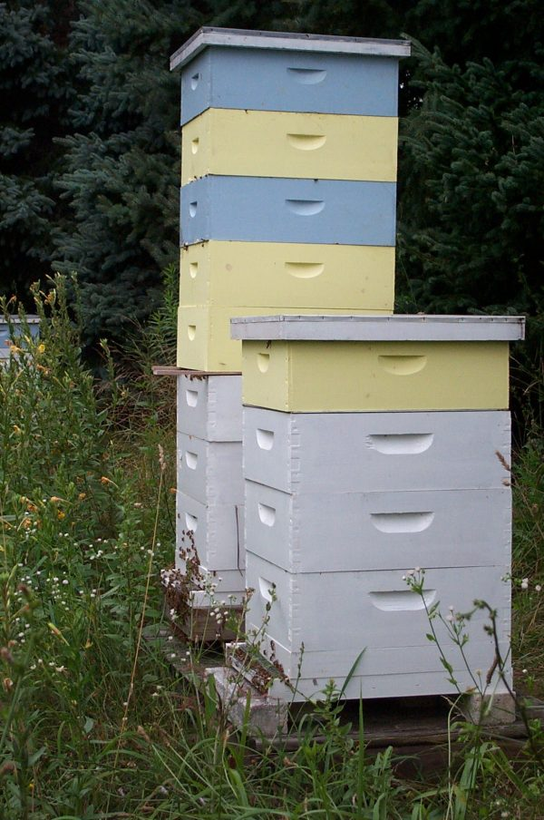 I recommend that you start with at least 2 hives
