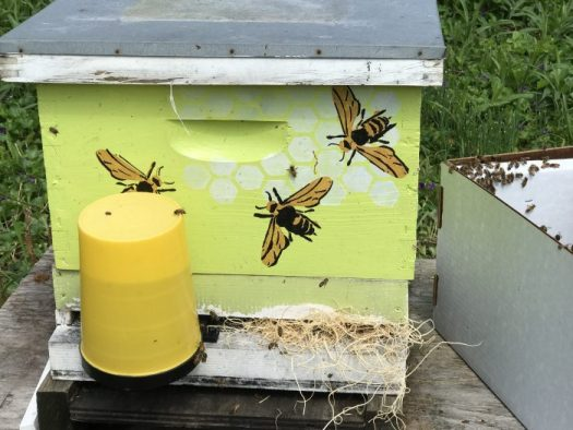 One of my newly installed nucs last spring