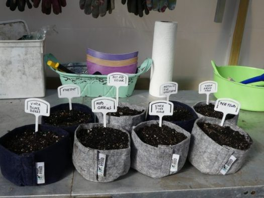 Root Pouch makes great seed starters
