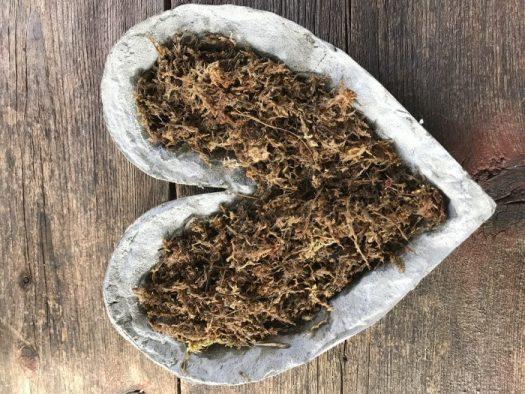 Moist moss in the bottom