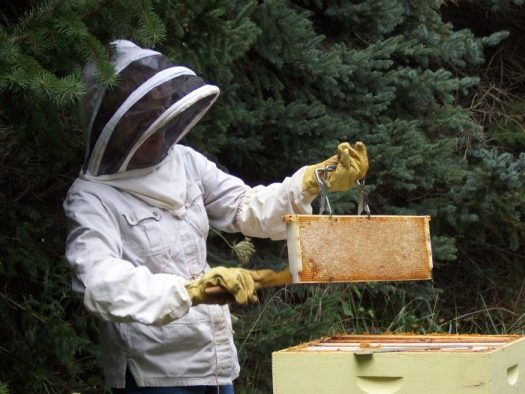 I use organic methods in my beekeeping