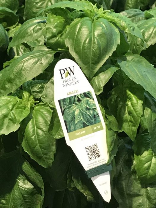 Read your plant tags for pesticide use