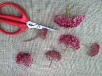 Deconstruct larger flowers like this 'Centennial Spirit' Hydrangea