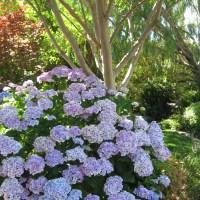 Garden Vignettes - Sweet Gardening