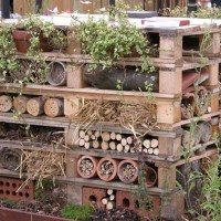 Home Sweet Home-Providing the Perfect Habitat for Mason Bees