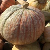 Pumpkin Eye Candy