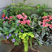 Help! What Can I Plant Besides Impatiens???? Some Alternatives