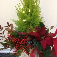 Lemon Cypress Christmas Tree
