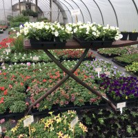 Blooming Hill Greenhouse-A Family Owned Business