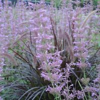 Fuzzy, Fragrant, & Ferny; Deer-Proof Plants For the Garden