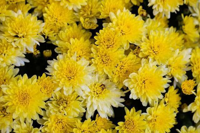 10 Plants with Yellow Flowers