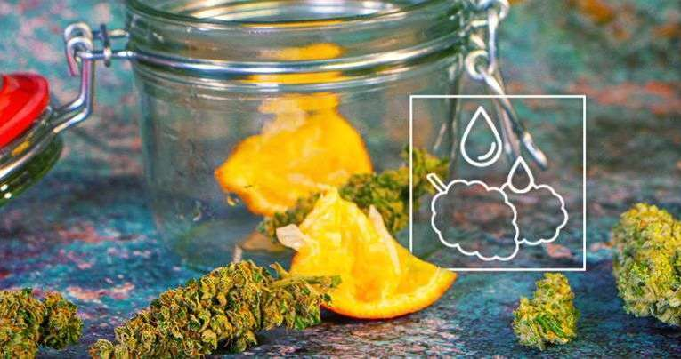 How To Rehydrate Your Dried-Out Marijuana Buds
