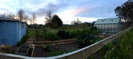 Hunua Homestead has a beautiful home garden in addition to chickens, cows, and pigs you can visit with.
