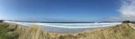 Sea grasses help maintain the beaches.