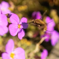 Favourite Insect Friendly Flowers and Plants - May