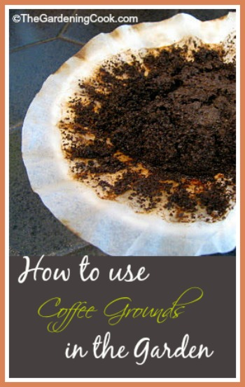 How to use coffee grounds in the garden.