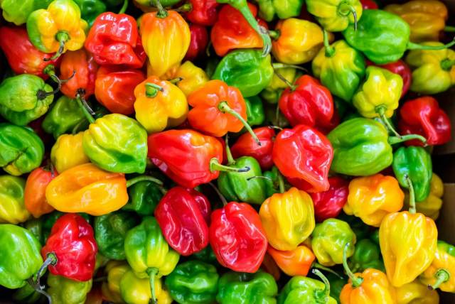 Habanero Peppers - how to grow peppers from seed