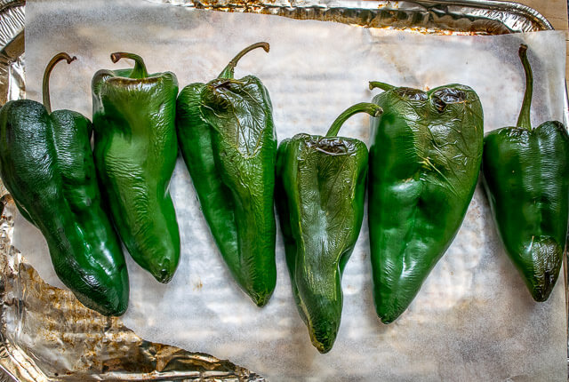 poblano pepper - how to grow peppers from seed