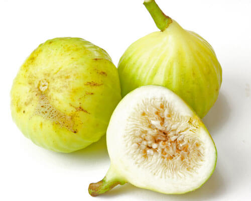 white marseilles fig