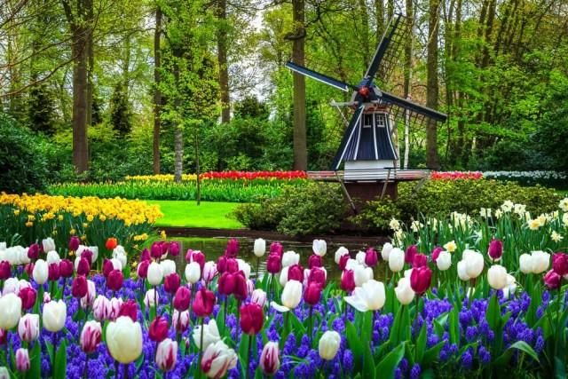 prepare tulip soil