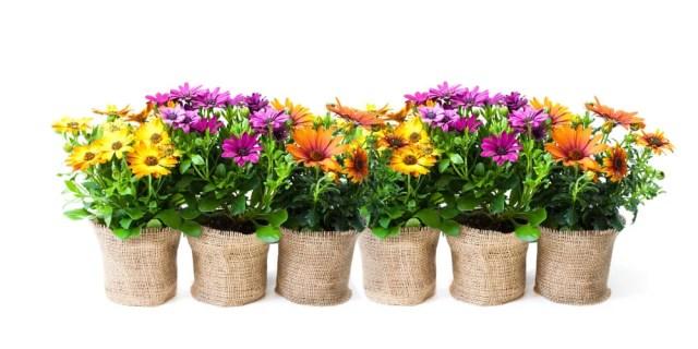 gardenings pots