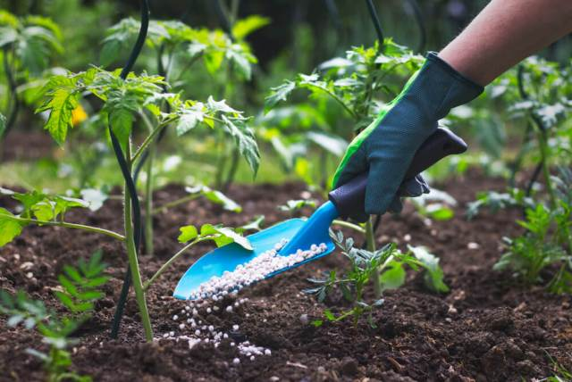 fertilizing plants - most common gardening mistakes