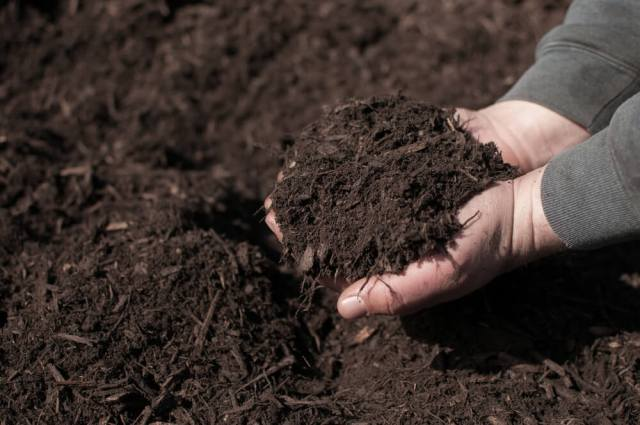 skimping on soil - most common gardening mistakes