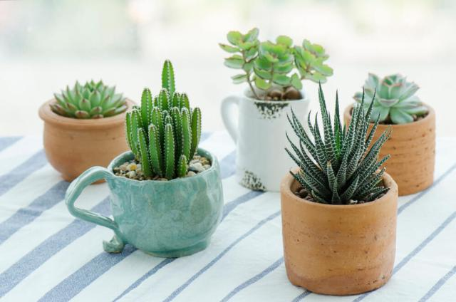 Storing Succulents