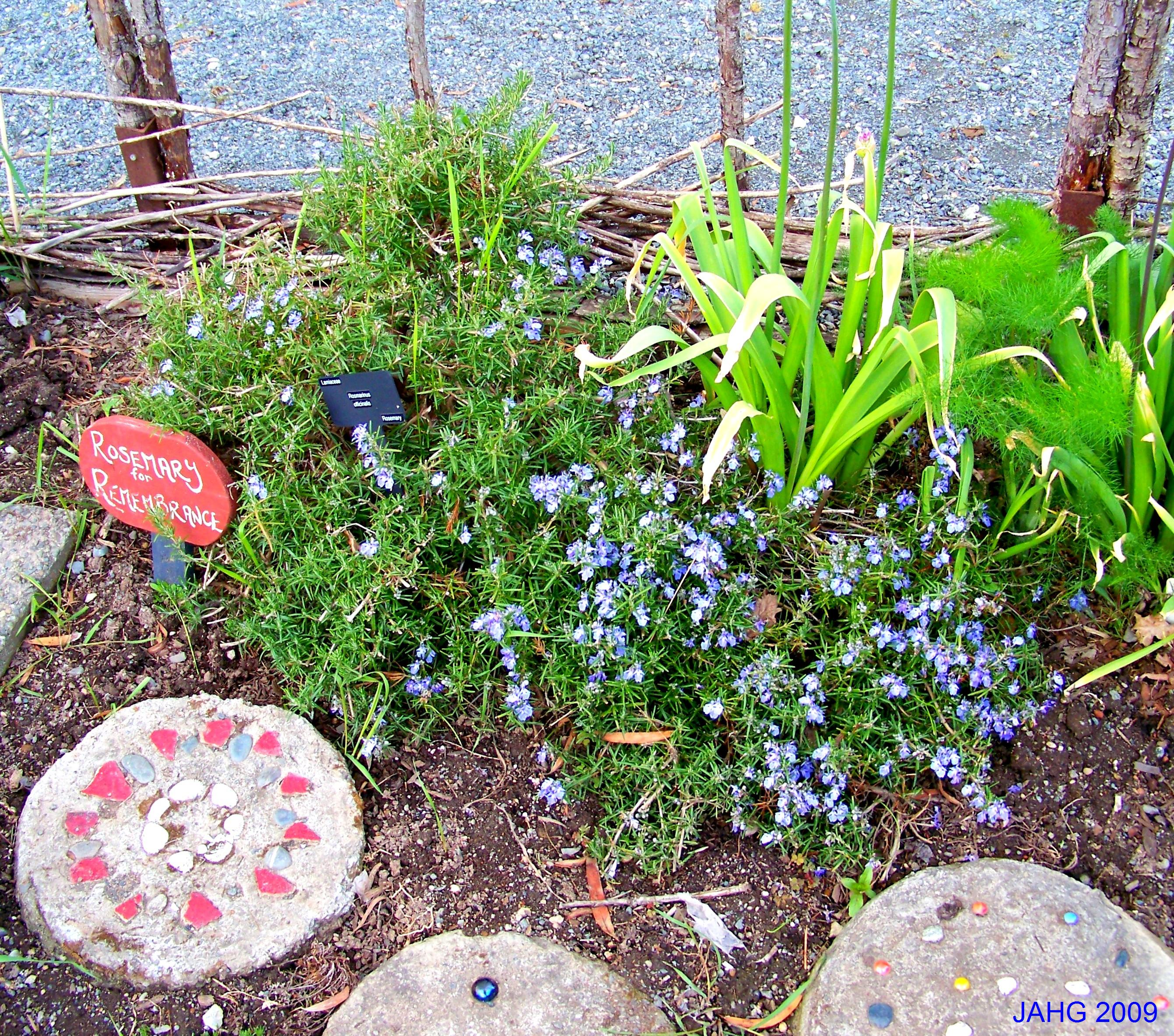 'Rosemary is for Remembrance' in the Children s Garden at Glendale Gardens.