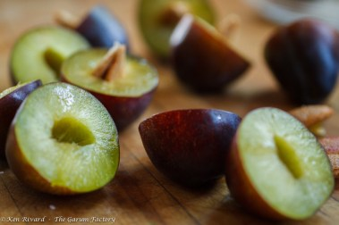 Fig, Plum and Hazelnut Tart-6-8292