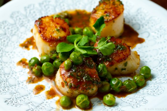 Scallops, peas and chervil-5965
