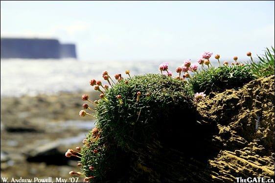 Coast of Orkney