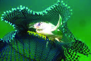New NOAA Turtle Excluder Device (TED) Rule to Begin April 1