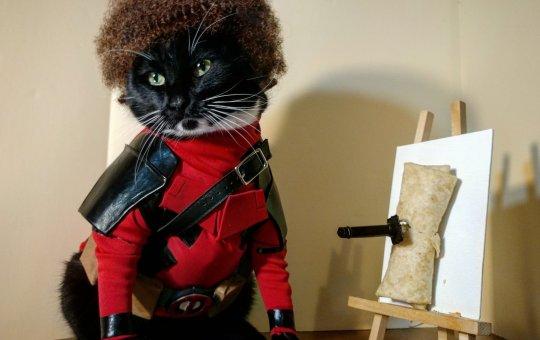 cat cosplay twitter