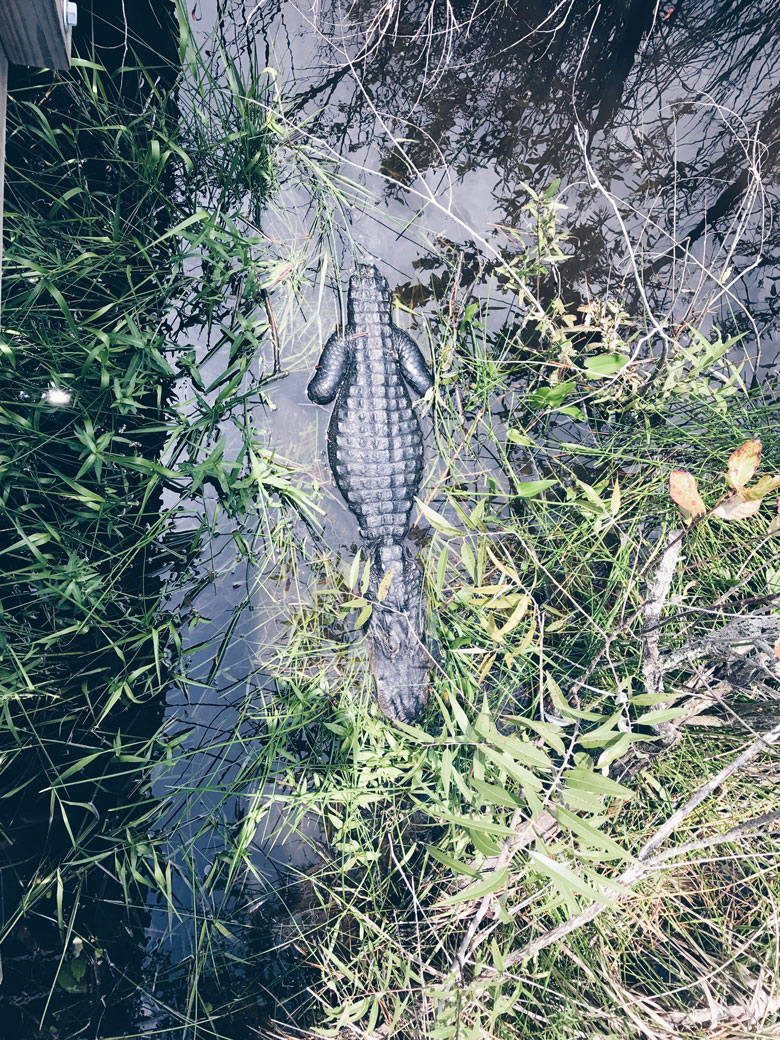 The Everglades - A taste of my week in Miami
