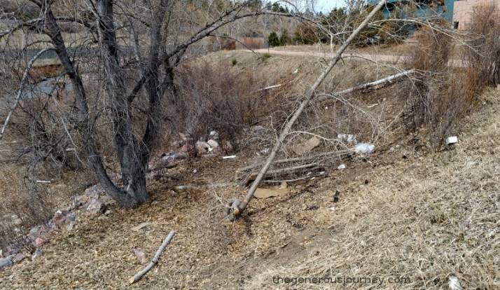 Beaver tree damage © Paul H, Byerly