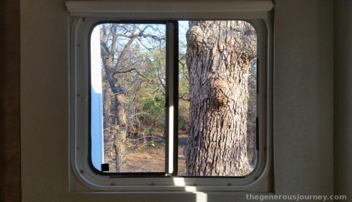 Tree in Window © Paul H. Byerly