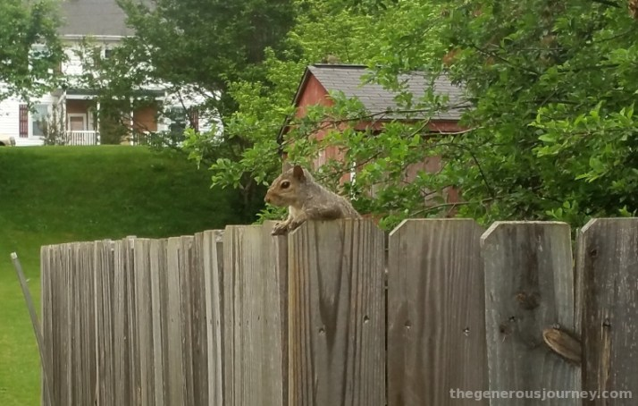 The squirrel who came to dinner © Paul H. Byerly