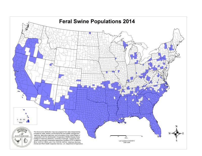 Pig Us Map Wild Population