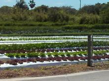 Verde Farm