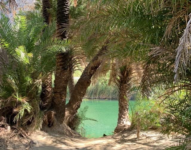 Palm Grove in Crete