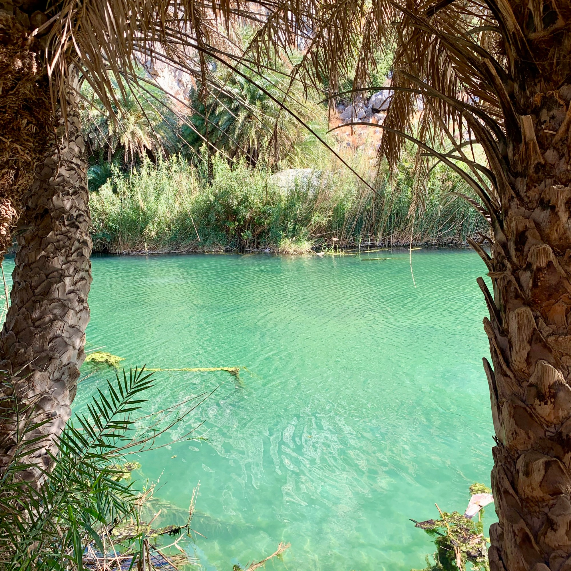 Palm Grove at Preveli Beach