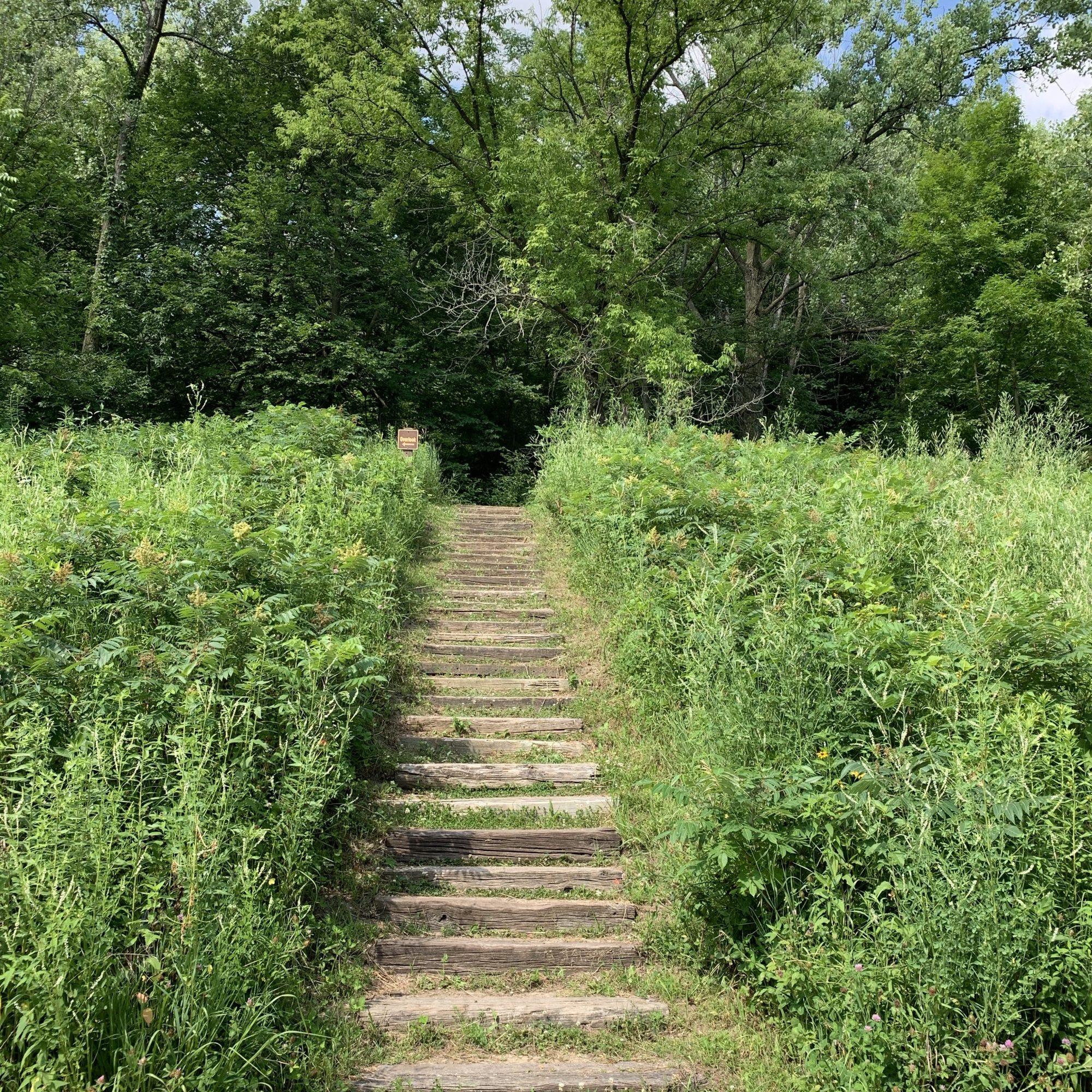 Path to Horseshoe Bluff
