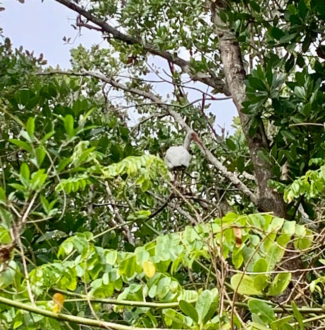 Bird in Tree Black Island Trails Florida