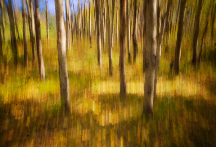 fall-colour-ICM