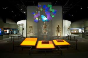 Visitors to the Museum's Spitzer Hall of Human Origins can see how modern humans differ from early humans and primate relatives, including in our ability to walk upright. D. Finnin/© AMNH