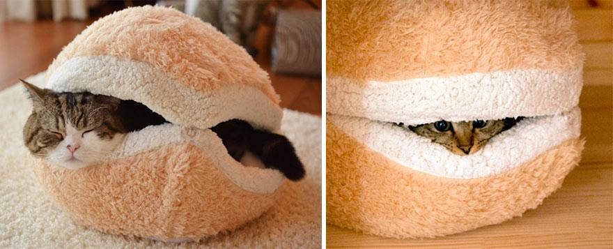 kedi hamburger
